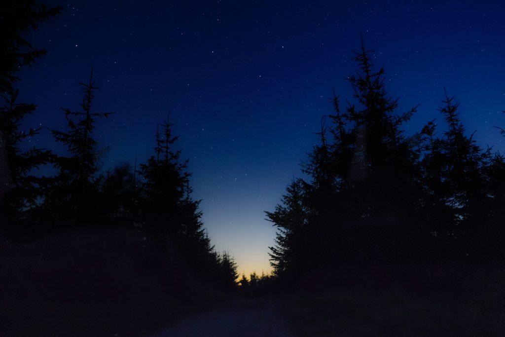 夜の森林で良い睡眠と深い眠り【GABA】の効果とは?