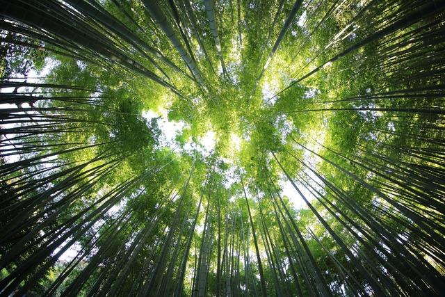 日本一簡単なアルファー波と睡眠のお話し α波とリラックス効果のまとめ